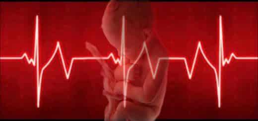 When Does A Fetus Develop A Heartbeat